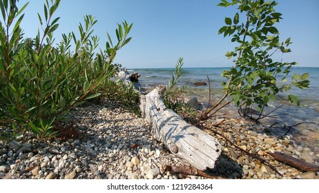 Driftwood on Huron shoreline