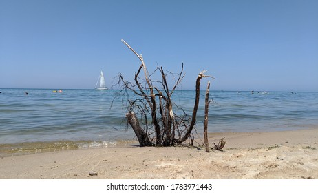 Driftwood on a Lake Michigan beach with a sailboat in the background on a day with clear, blue skies