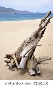 Driftwood on the Nha-Trang Beach in Vietnam