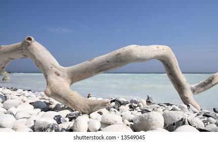 driftwood on a rocky beach