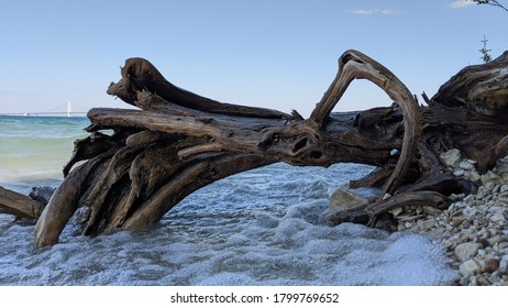 Driftwood on a rocky Lake Michigan beach in Mackinaw City with the Mackinac Bridge and the straits of Mackinac in the bakground