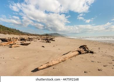 driftwood on sandy beach at West Coast, New Zealand