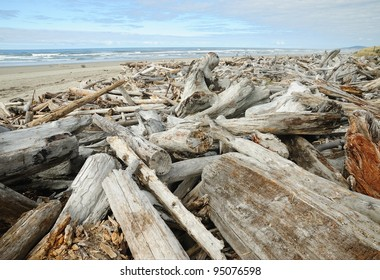 driftwood on scenic pacific coast in oregon, usa