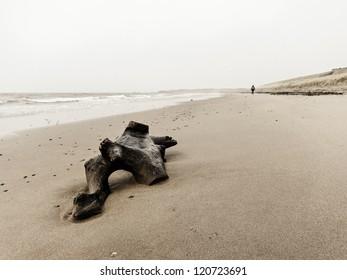 Driftwood and a single woman walking on Turnberry beach, Scotland, UK