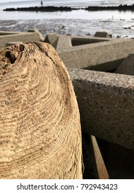 Driftwood of stump in winter