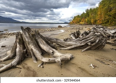 Driftwood, stumps, and fall foliage along the rocky shoreline of Flagstaff Lake in Somerset County, northwestern Maine.