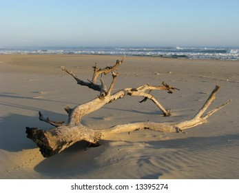 Driftwood that has washed up onto the beach after a violent storm