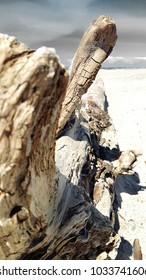 Driftwood tree on the beach in bad weather and a grey sky
