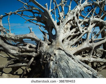 Driftwood tree/Old Roots/A dead driftwood tree on the beach on a sunny day in South Carolina.