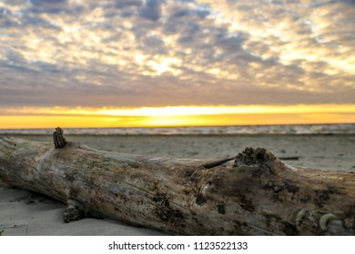 Driftwood washed ashore during the early morning on Galveston Island, TX.