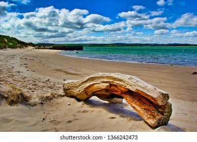 Driftwood washed ashore on a Northumberland beach