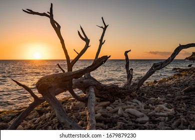 Driftwood and White Wine at sunset on the Beach