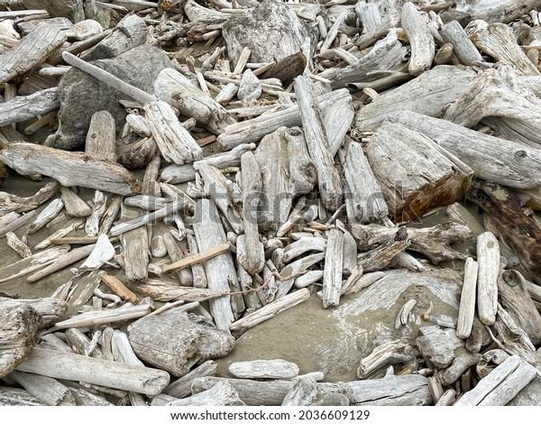 driftwood wood log shards washed up on the sandy beach
