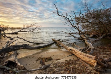 Driftwoods. Grey tree branches lying over the water, dry dead wood in a lake