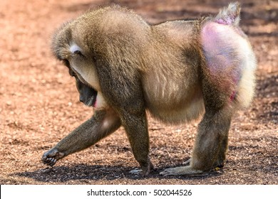 Drill Monkey Images, Stock Photos & Vectors | Shutterstock