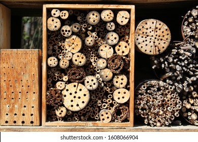 Drilled wooden pieces for insects, mostly for bees as a natural hive in Innsbruck, Austria.