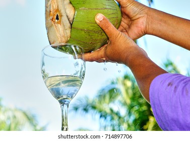 Drink coconut water in the summer