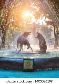 Drinking coyotes statue and fountain in Hidalgo Square in Coyoacanc