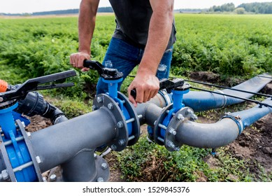 Drip irrigation system. Water saving drip irrigation system being used in a young carrot field. Worker opens the tap. Agricultural background