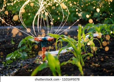 Drip irrigation system watering the garden. Mechanically automatic watering. Water consumption.