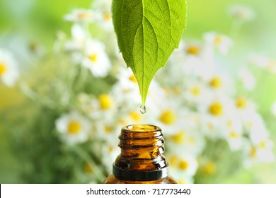Dripping chamomile essential oil into bottle on blurred background