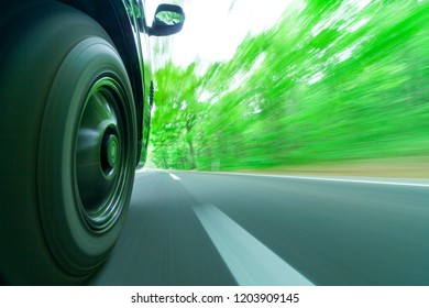 Drive in a green forest