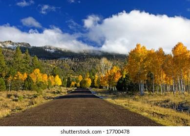 Drive into autumn season