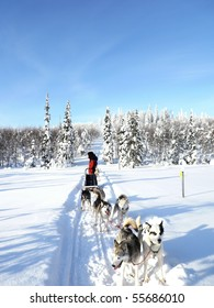 A  driver stops his dog-sledge to wait for other sledges to catch up with him in Finland.