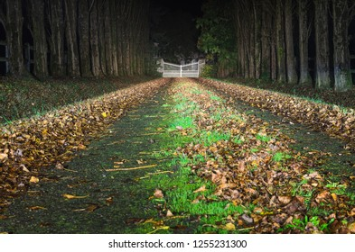 Driveway to the big white gate in the distance, in perspective, with tree rows and fallen leaves at one autumn night