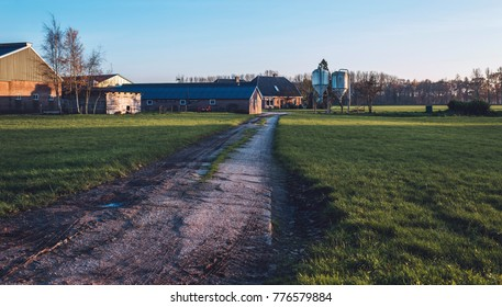 Driveway to farm in rural landscape. Lit by low autumn sunlight.