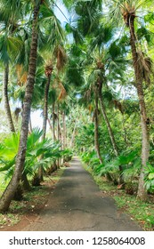 driveway lined with coconut trees