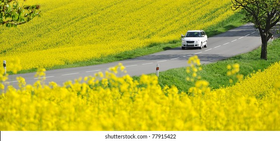 Driving car on road in yellow canola fields, panorama