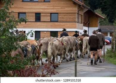 """The driving cattle down from the alpine pastures. In german it calls """"Viehscheid"""" or """"Almabtrieb"""". This picture is taken in bayern. There is this a lived tradition."""