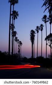 Driving down palm tree row