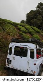 driving up tea fields