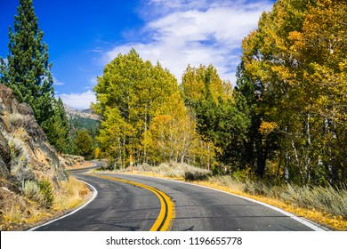 Driving through the Sonora Pass in the Eastern Sierra mountains on a sunny fall day; colorful aspen trees on the side of the road; California
