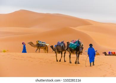 Dromedaries at the desert, MErzouga, Morocco