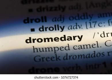 dromedary dromedary concept.