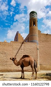 Dromedary standing in front of a religious building in Khiva with a minaret with a blue dome