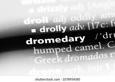 dromedary word in a dictionary. dromedary concept