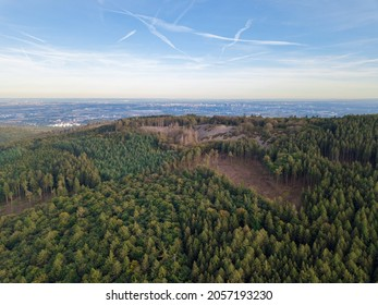 Drone aerial Panorama of forest dieback caused by bark beatle in the Taunus close to Frankfurt and Oberursel, Germany at the Weisse Mauer