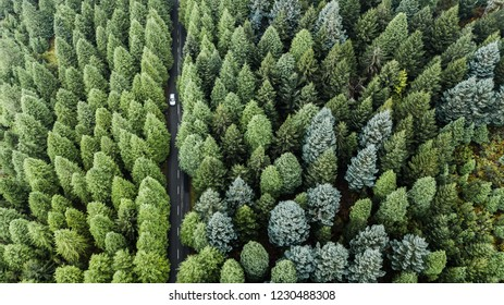 """Drone aerial view from above of road through the green autumn forest in """"Poiso"""", Madeira island, Portugal."""