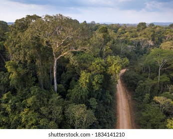 Drone aerial view of amazon rainforest in Jamanxim National Forest, Para, Brazil. Giant trees on an illegal road in a threatened area of the forest. Concept of environment, ecology, conservation.