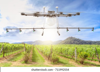 Drone for agriculture, smart farmer use drone for spray pesticide in vineyards