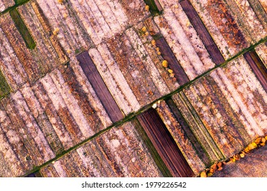 A drone, an early morning bird's eye view of the spring fields of peasants, where cherries and plums are blooming. Decorative pattern of arable land and paths with plants.