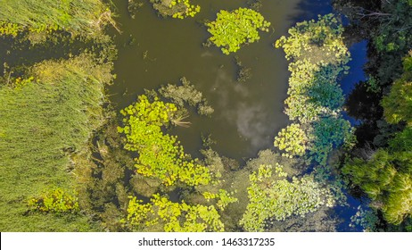 Drone flight under the small swamp and river at the summer with lot of water lilies