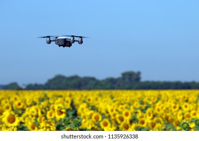 The drone is flying over the sunflower field summer season