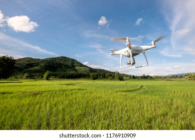 drone flying surveying rice green farm agriculture technology concept