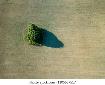 drone image. aerial view of empty cultivated fields with lonely tree in the middle. latvia summer day