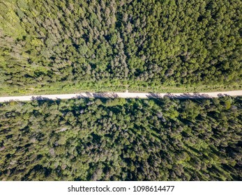 drone image. aerial view of rural area with forest road in sunny day. latvia